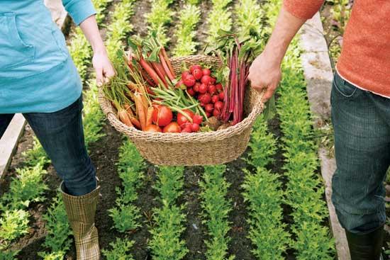 Veggie-Garden jpg