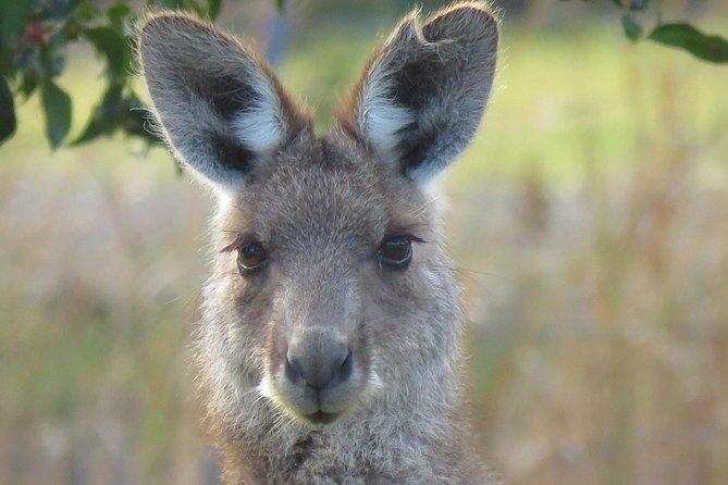 wildlife-safari-byron-bay