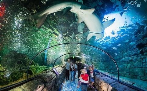 Sydney aqaurium