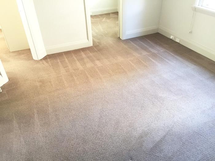 citra-clean-carpet-cleaner-sydney-3