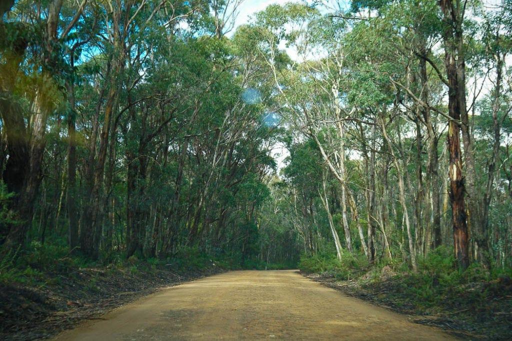 kanangra-boyd-national-park-1