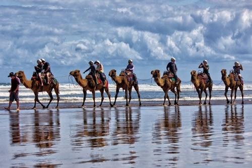 Camel ride on Australian beach