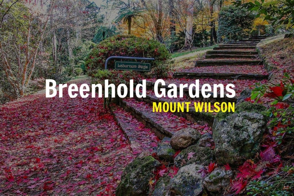 breenhold-gardens-blue-mountains