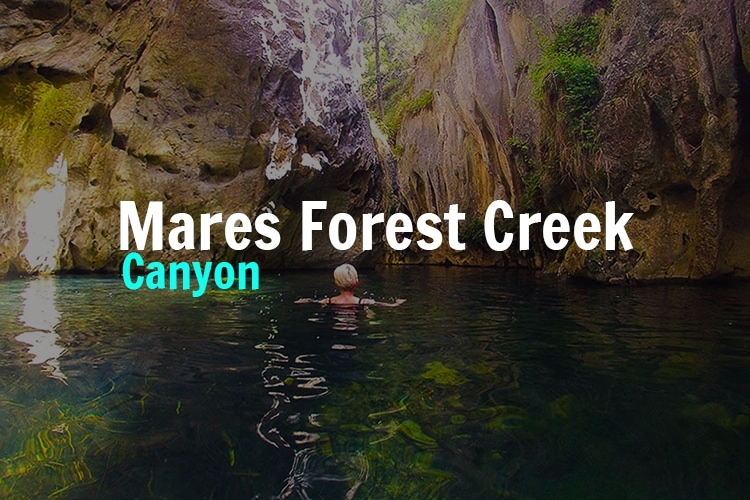 Mares-forest-creek-canyon-wombeyan
