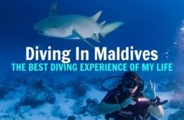 fulidhoo-dive-maldives-cheap-diving