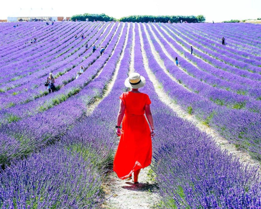 england-lavender-fields