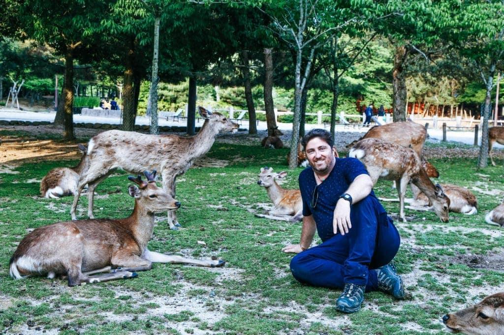 nara-park-wild-deer-japan