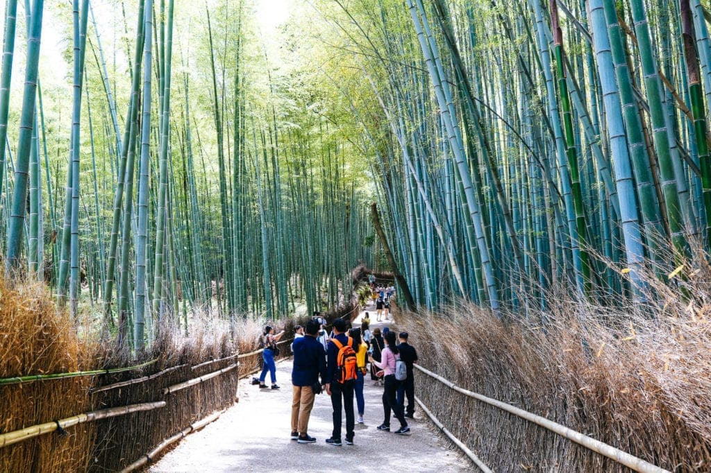 bamboo-forest-kyoto-japan
