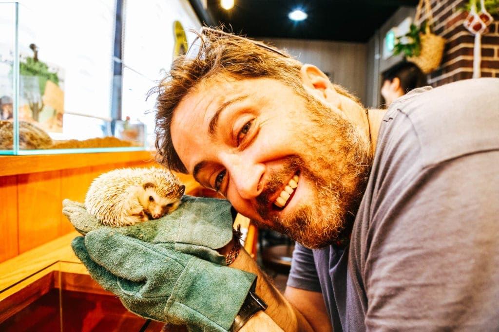 harry-the-hedgehog-cafe-japan