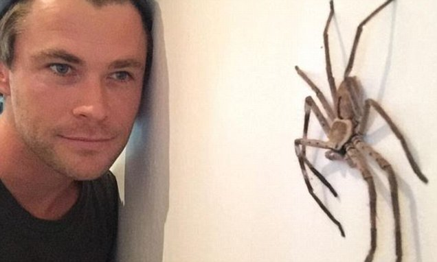 Chris-hemsworth-spiders