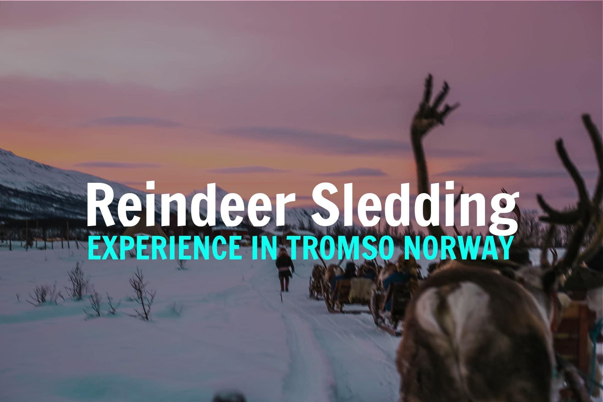 TROMSO-REINDEER-SLEDDING