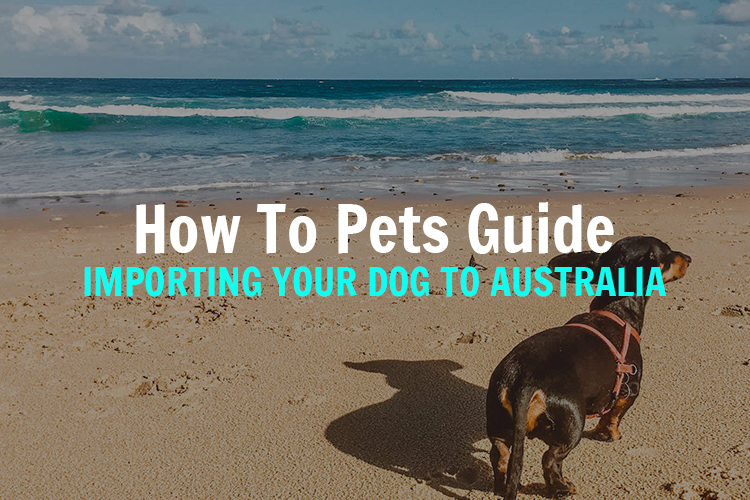importing-you-dog-to-australia