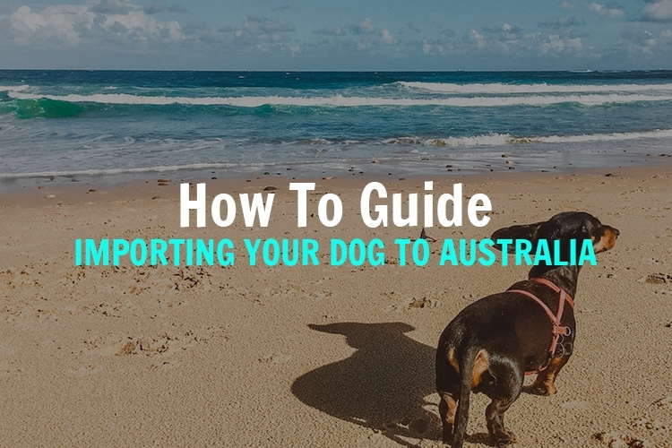 importing-your-dog-to-australia
