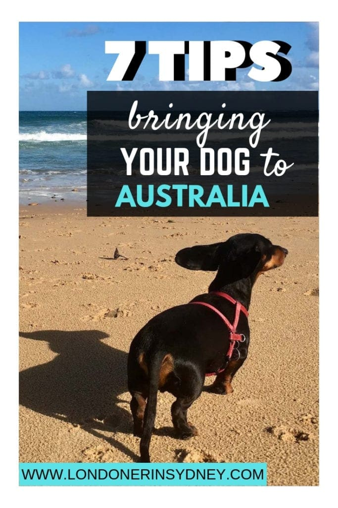 DOGS-TO-AUSTRALIA