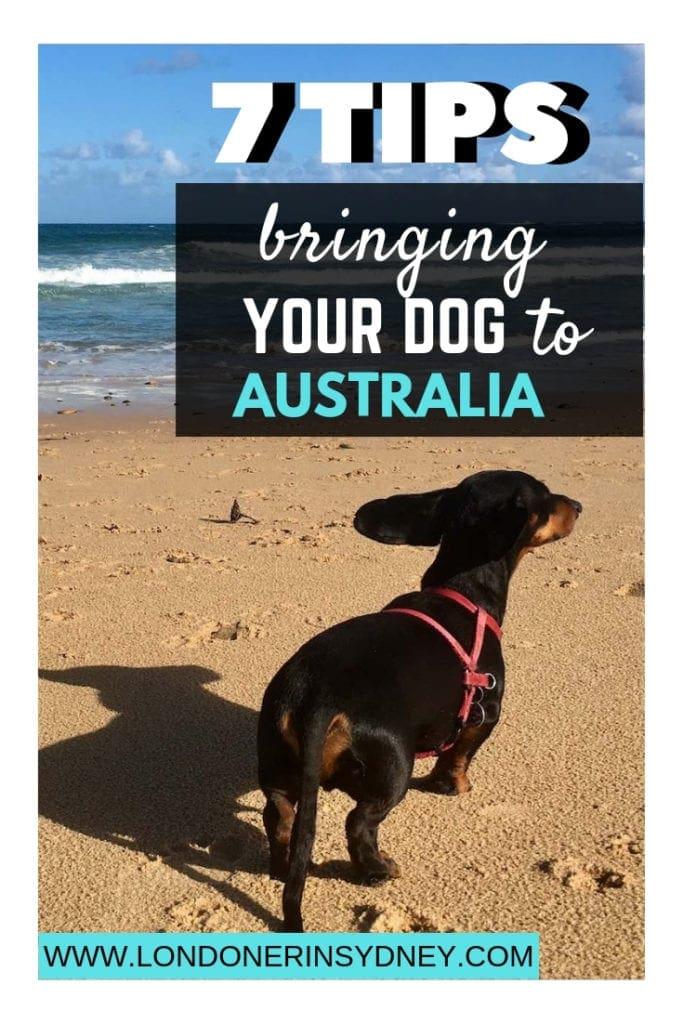 bringing-dogs-into-australia