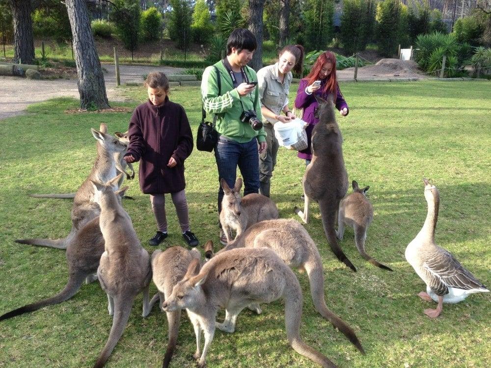 Symbio-wildlife-park-wollongong