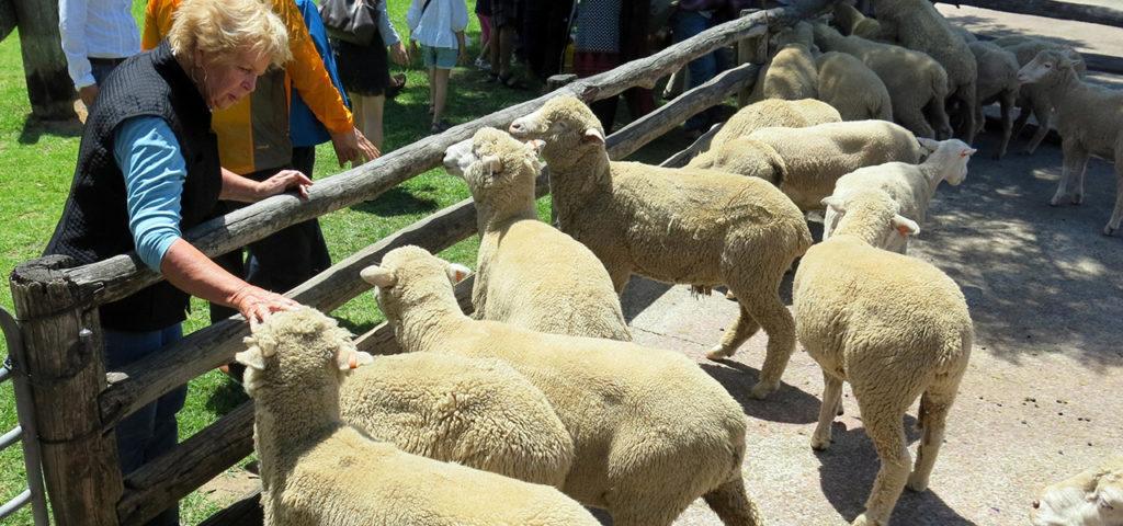 Tobruk-Sheep-Station-Sydney