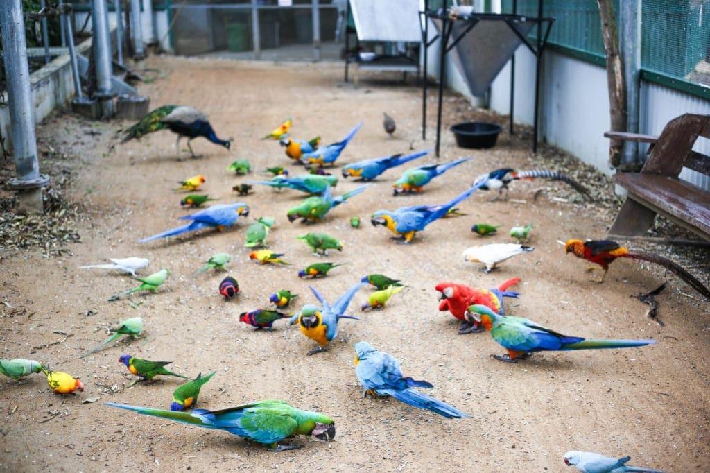 bird-world-exotic-birds-sunshine-coast-australia