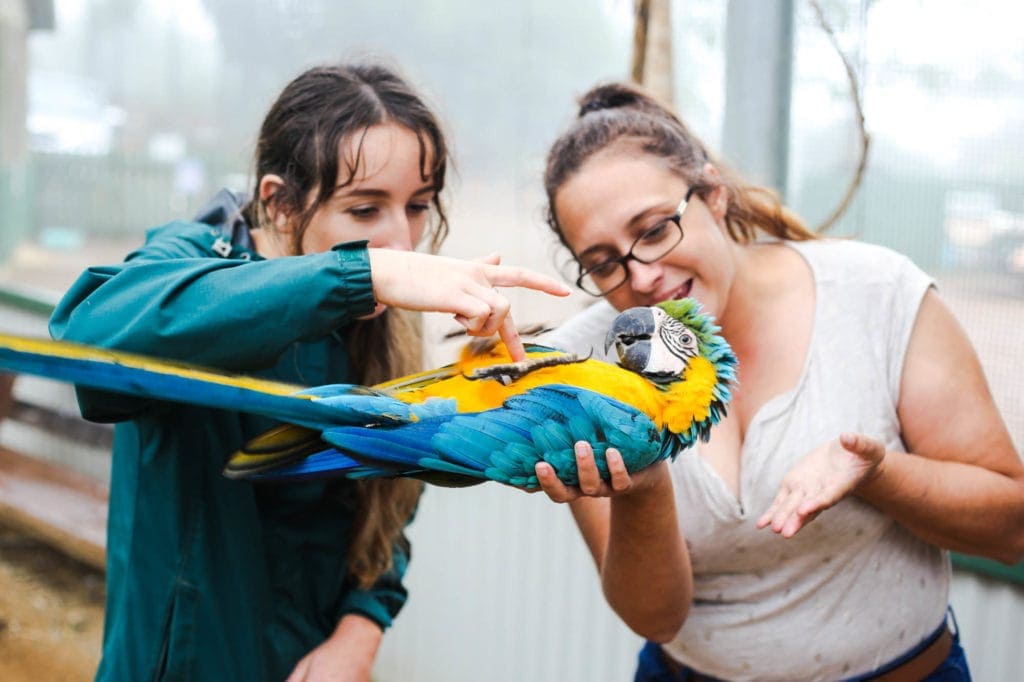 bird-world-maleny-botanic-gardens