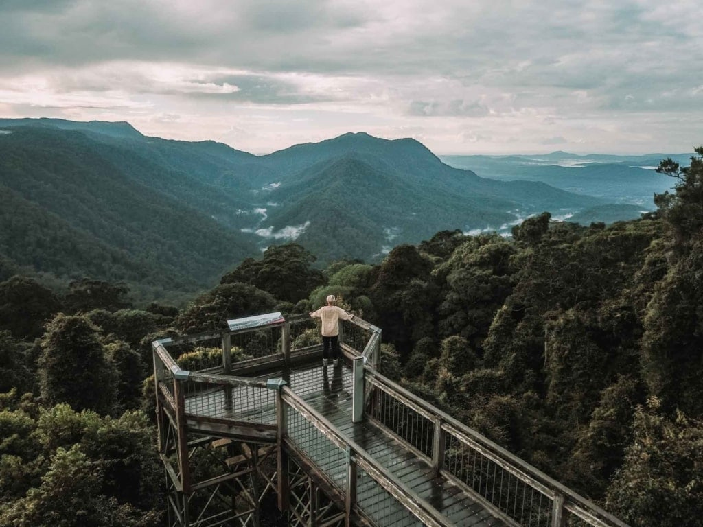 skywalk-dorrigo-rainforest-centre