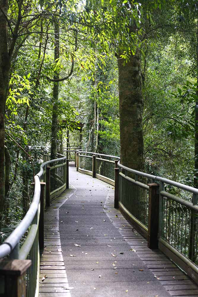 bird-walk-dorrigo