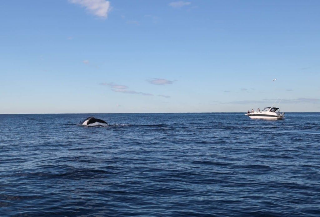 Sydney-whale-watching-tour