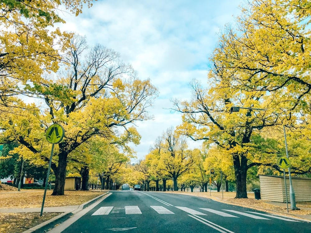 armidale-nsw-autumn-leaves