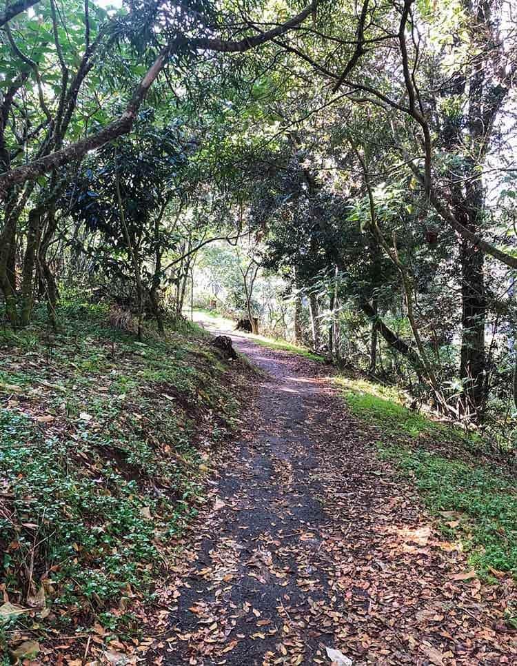 walking-path-to-bottom-of-dangar-falls