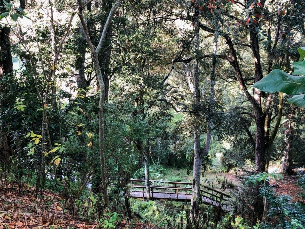 dangar-falls-walk