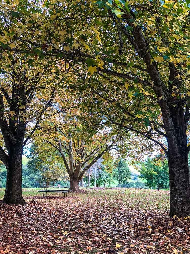 picnic-spot-near-bellingen