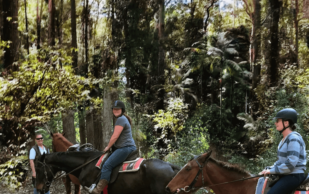 valery-trails-horse-riding-bellingen