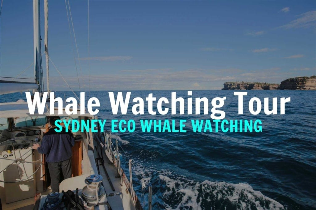 WHALE-WATCHING-SYDNEY