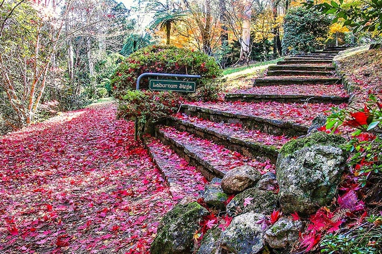 Best Place To See Autumn Leaves At Breenhold Gardens In Mount Wilson, Blue Mountains