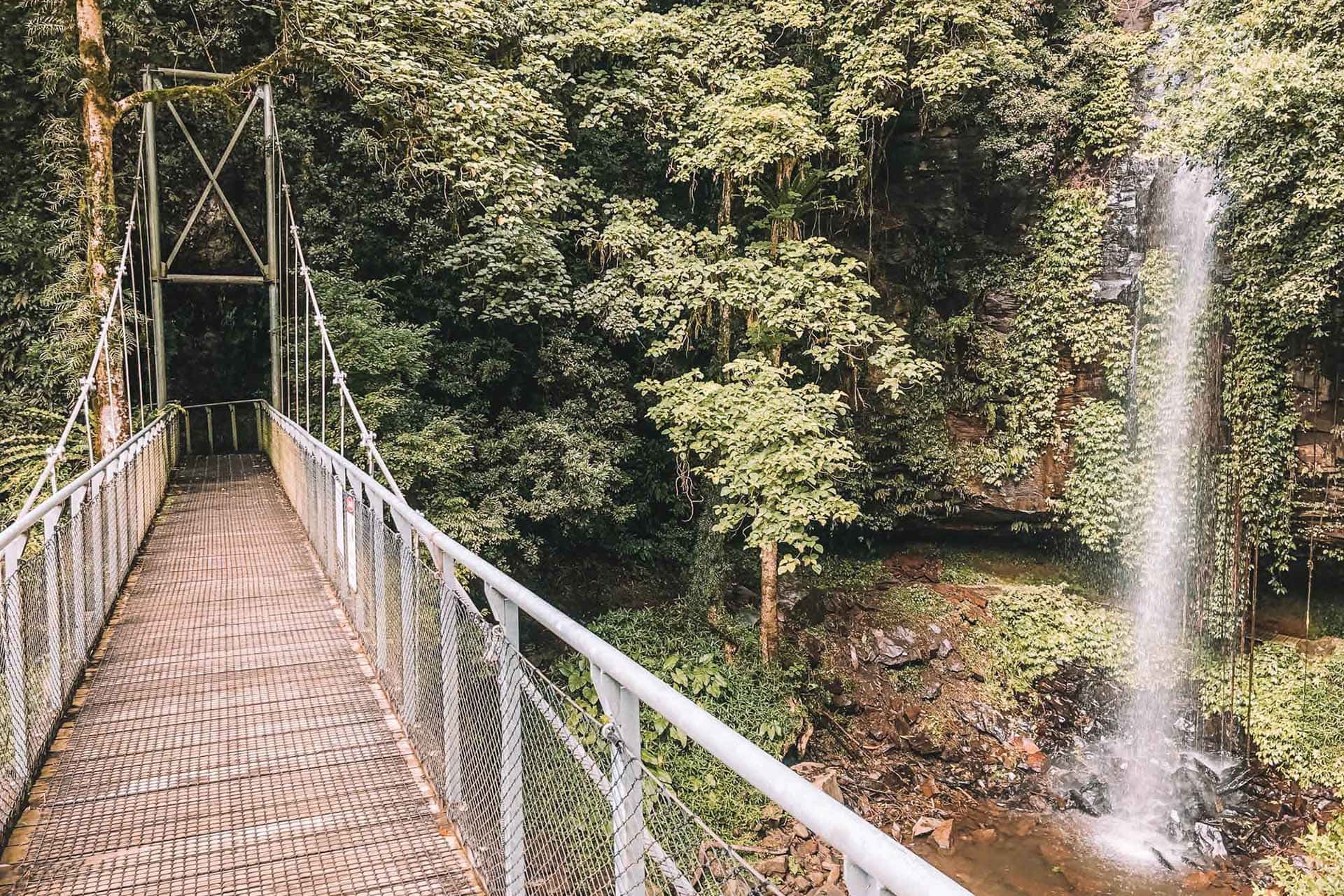 10 Things To Know About Crystal Shower Falls Walk In Dorrigo National Park
