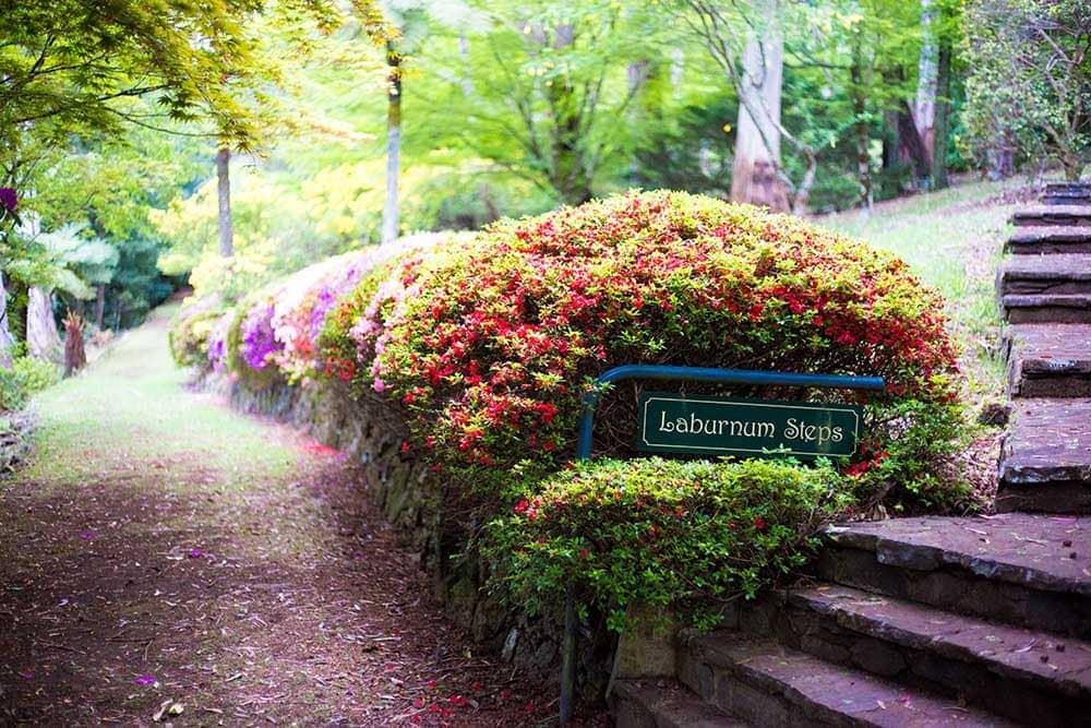 breenhold-gardens-mount-wilson
