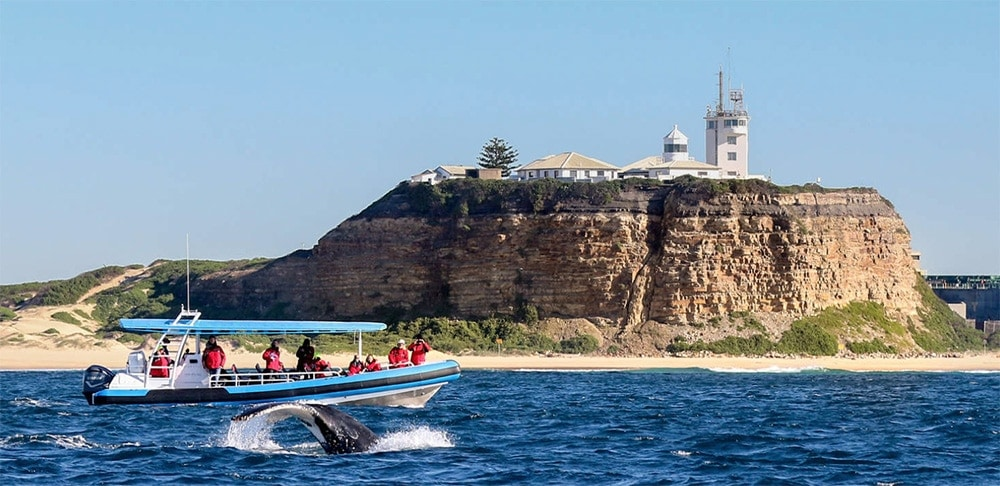 whale-watching-newcastle-nsw