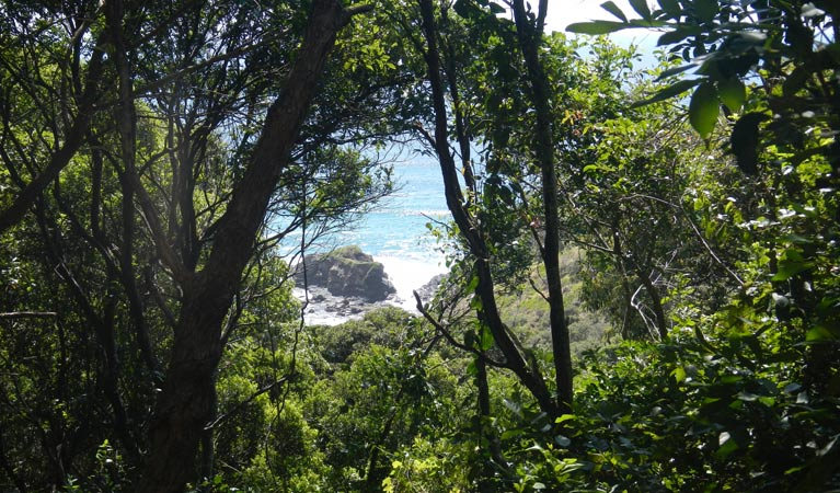 Rainforest-walking-track-south-west-rocks
