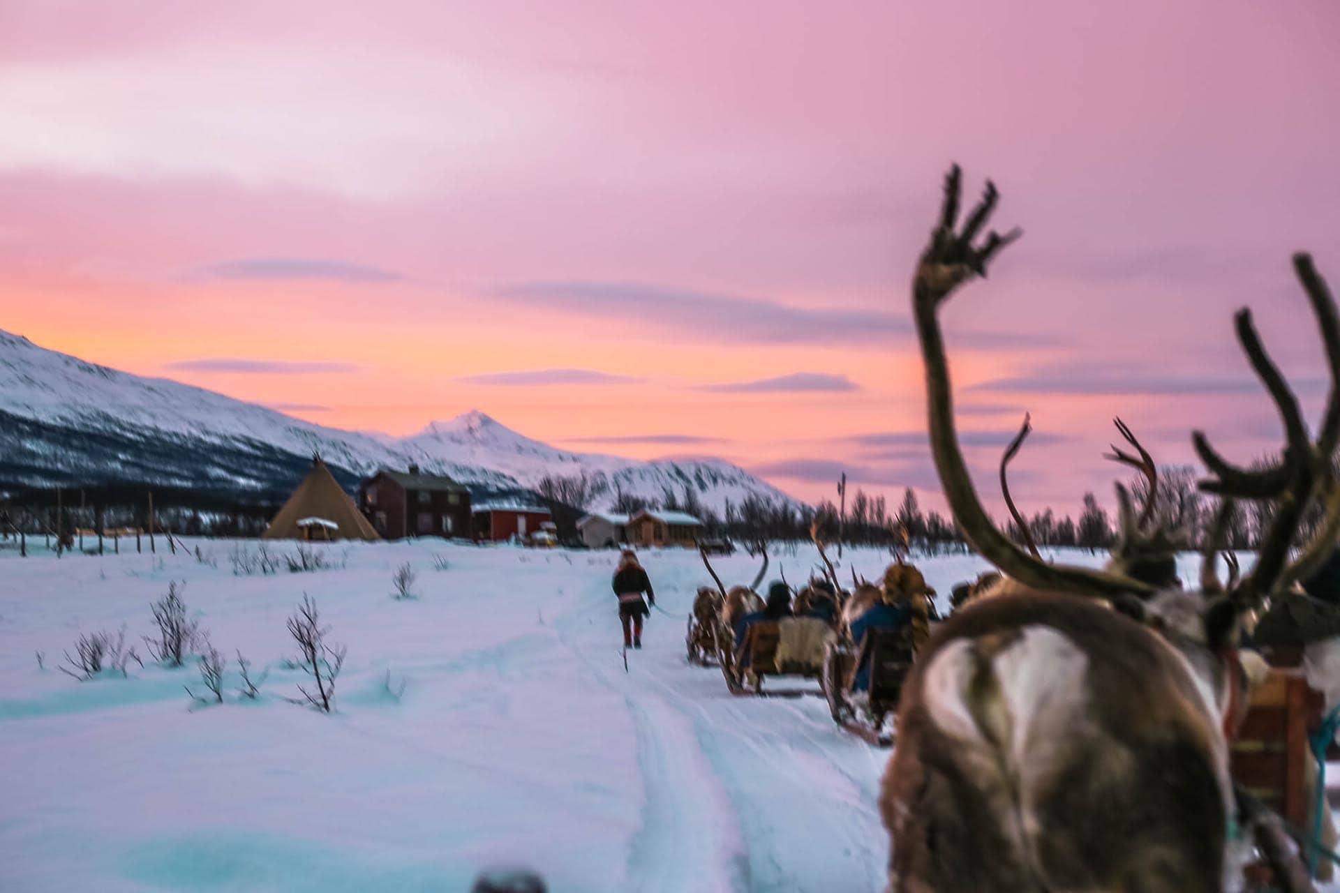 tromso-reindeer-sledding-1