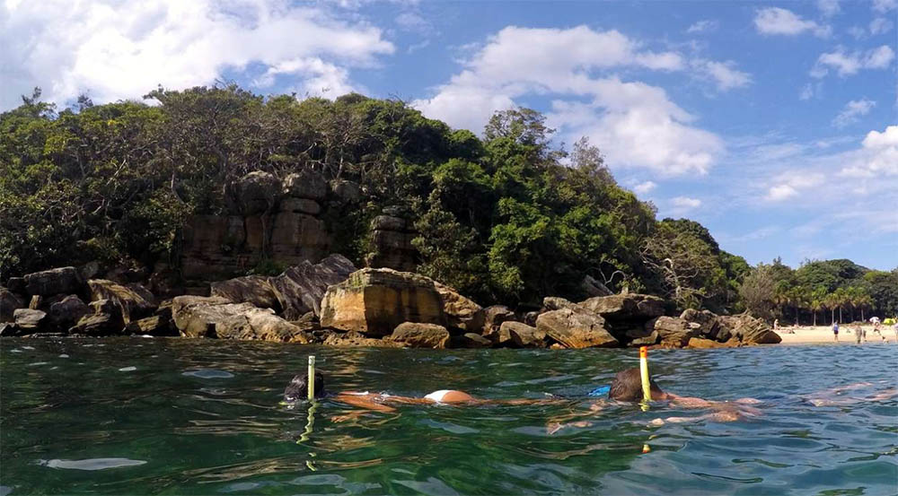 snorkelling-manly