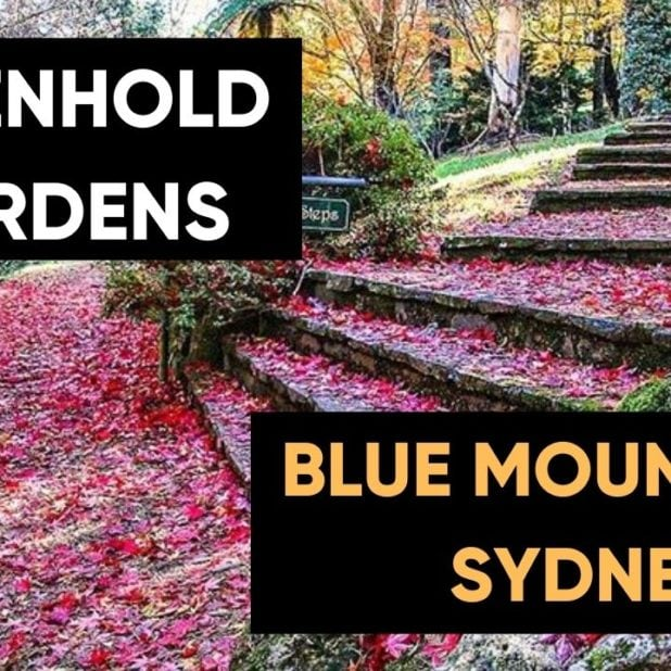 breenhold-gardens-blue-mountains