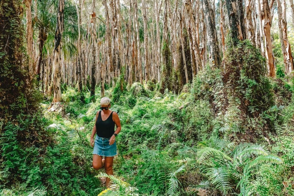 paperbark-forest-walk-agnes-water