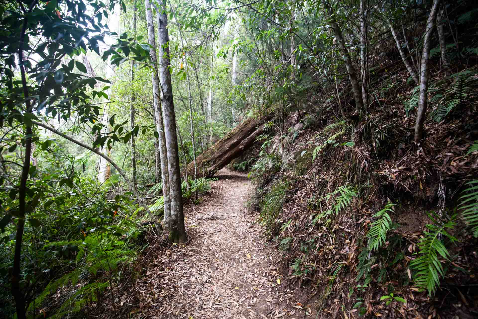 purling-brook-falls-springbrook-national-park-23