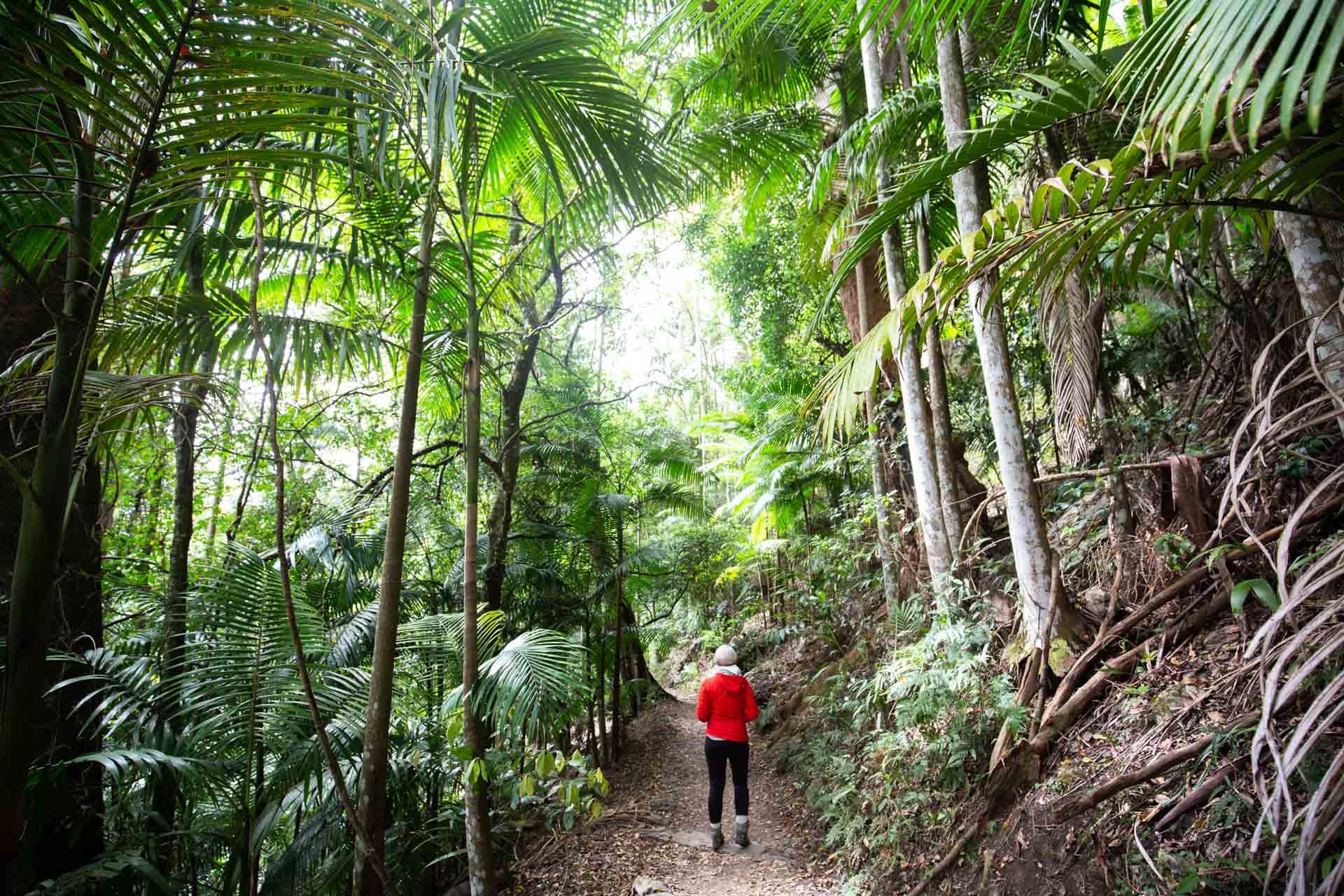 purling-brook-falls-springbrook-national-park-7