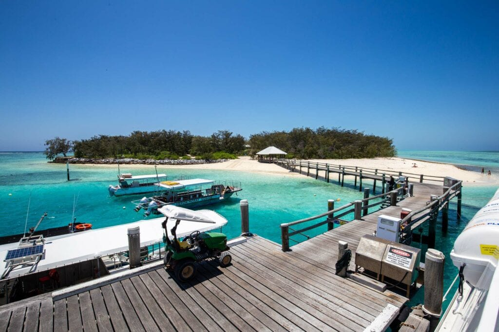 Heron Island Review 2021: The Ultimate Guide To Paradise