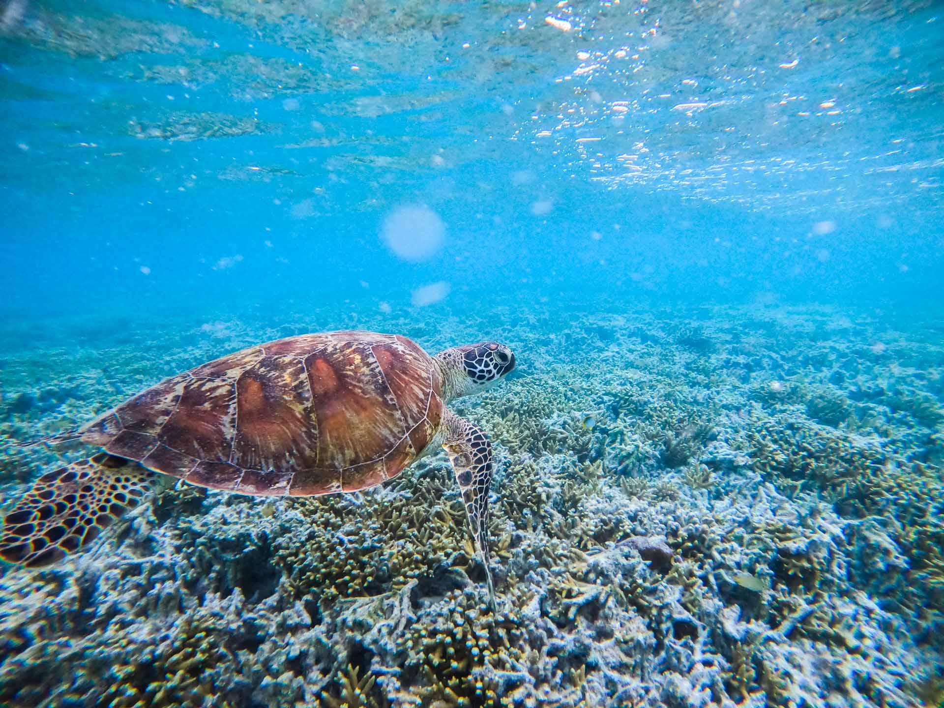 heron-island-great-barrier-reef-4