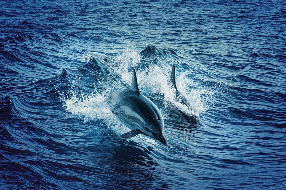 dolphin-cruise-jervis-bay