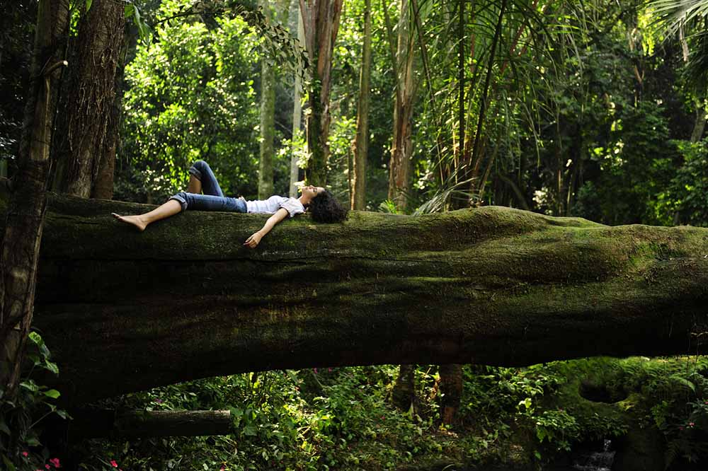 forest-bathing-kangaroo-valley